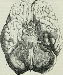 Anglų lietuvių žodynas. Žodis spinal nerve root reiškia stuburo nervų šaknis lietuviškai.