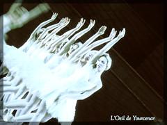 DANSEUSES (Il Lago dei Cigni - Stagione Estiva del Teatro dell'Opera di Roma presso le Terme di Caracalla (L'oeil de Yourcenar) Tags: ballet rome roma opera swanlake lelacdescygnes  ajkovskij