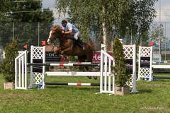 DSC08742_s (AndiP66) Tags: horse macro sports sport schweiz switzerland sony august sp di if alpha tamron concours pferd equestrian f28 canton solothurn ld horsejumping 70200mm wettbewerb 2014 springen 1august kanton springreiten subingen andreaspeters pferdespringen 77m2 wasseramt a77ii ilca77m2 77ii 77markii slta77ii 1augustspringen