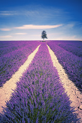 Lavender spirit (Frdric Prochasson) Tags: blue light summer plant france flower beautiful beauty field lines square french landscape outdoors countryside colorful purple scenic magenta violet lavender nobody rows fragrant provence picturesque lavande abundance herbal scent azur fragrance aroma blooming scented aromatherapy alpesdehauteprovence valensole provencealpescote lavendin sunnylandscape
