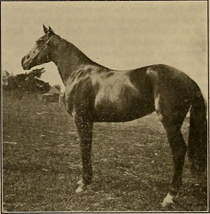 "Image from page 313 of ""Breeder and sportsman"" (1882)"