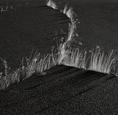 Grass growing through Cracks in the Pavement, Pendleton, Oregon (austin granger) Tags: film nature grass square time pavement crack will land development topography gf670 austingranger