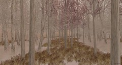 Amongst Trees