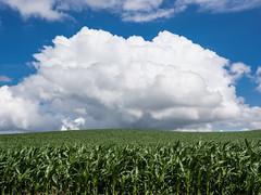 Cloud over corn field (Teelicht) Tags: cloud germany deutschland cornfield wolke maisfeld saxonyanhalt sachsenanhalt