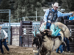 Wild Ride (ventiphoto) Tags: horse color cowboy olympus rodeo omd 75mm em5