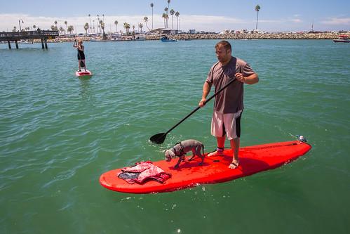puppy paddleboard