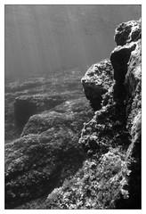 18050-Paysage Sousmarin de Méditerranée (Alia Vido Photography) Tags: light france water landscapes rocks eau underwater lumière paca freediving rays algae fishes reflets var paysages mediterraneansea roches poissons rayons algues méditerranée sousmarin posidonia glints apnée shallowwaters posidonie petitsfonds