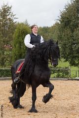 Tatjana Frh mit Ernie (HendrikSchulz) Tags: ernie pferde pferd barock friesen 2014 friesian frh dfz bondorf barockpferde zuchtschau friesenpferde baroquehorse barockpferd baroquehorses