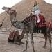 Giza Plateau_1135