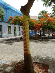 New Tree Fashion  2014 (paramonguino) Tags: tenerife santacruzdetenerife canaryislands islascanarias kanarischeinseln p1190899 270814 copiarw899jpg