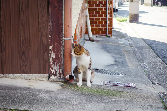 Today's Cat@2014-09-07