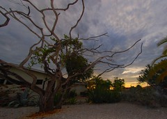 Old tree, last light. (gillybooze (David)) Tags: sunset clouds vista caribbean abstracts bonaire ©allrightsreserved