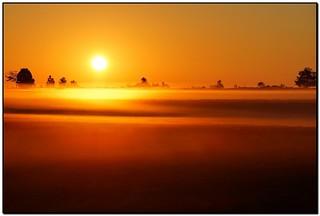 Golden Mist on the fields of Mulmur