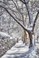 Charlotte St. 3 (alamme) Tags: winter snow street canandaigua ny upstate trees fingerlakes