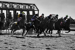 Horse Race Keeneland Kentucky (Klaus Ficker --Landscape and Nature Photographer--) Tags: kentucky keeneland horse race kentuckyphotography klausficker canon eos5dmarkii bw selectcolor sc photoshop
