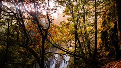 Nature Falls Autumn