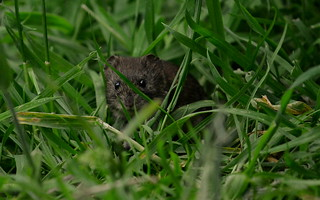 I Was Sat In A Meadow And Realised I Was Being Watched ...