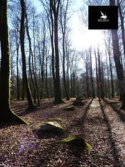 Le Cordon des Druides dans la Forêt de Fougères (Pegasus & Co) Tags: ブルターニュ breizh bretagna bretagne brittany histoire history land people château duché бретань mer celt celtique breton 布列塔尼 britannia