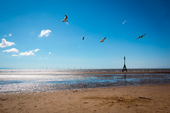 Burbo Bank (Camera Belly.) Tags: seagulls beach crosby burbo