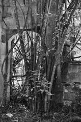 Ruines de la ferme de Grainval (DavidB1977) Tags: bw france 35mm nikon ruins nb iledefrance porche ferme ruines vestiges valdoise d90 frouville grainval