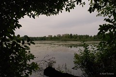 Mud Lake, Ottawa River. (ElMalva) Tags: summer naturaleza lake ontario nature water buildings river landscape lago agua framed ottawa paisaje verano nepean exteriores mudlake edifiicios lincolnheigts