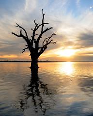 Lake Bonney (Jeff Bowey) Tags: sunset water silhouette reflections southaustralia berri lakebonney