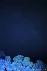 Trees in the night under sky of stars (arturo.hermosilla) Tags: trees sky night stars cuatro lumix under panasonic micro pancake arturo f25 14mm tercios hermosilla mallaeta