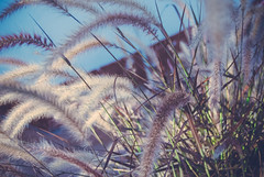 Paz (carusobusch) Tags: paz calma neturaleza
