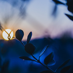 In the darkness before the dawn (Caterina Zito) Tags: blue light sunset italy sun macro nature leaves sunrise 50mm dawn leaf twilight nikon darkness naturallight midnight bluehour tones cesenatico bluetones 50mmnikon flickrchallengegroup flickrchallengewinner vsco nikond3100 vscocam