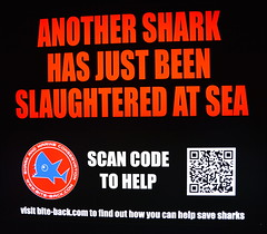 Help The Sharks (pringle-guy) Tags: fish london animals nikon sealife londonaquarium