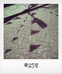 "#DailyPolaroid of 13-6-14 #258 • <a style=""font-size:0.8em;"" href=""http://www.flickr.com/photos/47939785@N05/14643113155/"" target=""_blank"">View on Flickr</a>"