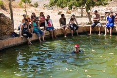 Samaria: A refreshing Natural pond (Flavio~) Tags: summer israel vine winery shilo shomron tiul arieluniversity departmentofchemicalengineering departmentofchemicalbiology