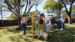 DSC_0571 (Clube de Cãompo Hotel Fazenda para Cães) Tags: agility jundiaí estimacão clubedecãompo clubedecãompohotelfazendaparacães hotelfazendaparacãesituclubedecãompo