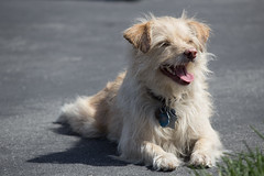 San Francisco - Duboce Park - happy dog