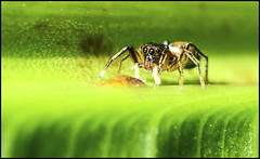 Spider (Fazar Photography) Tags: macro nature closeup insect spider