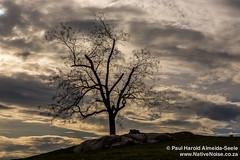 Bare Tree in Plovdiv, Bulgaria