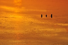 """_DSC0868 """"Gold Dust on the Pond"""" (ipon1) Tags: sunset france reflection nature lago gold pond nikon lumière south ngc estanque lagoa ponds marais southoffrance reflexo reflets reflejos chevaux camargue tanque méditerranée mfcc étangs raiodeluz nikond90 zoneshumides fabuleuse 攝影發燒友"""