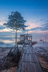 Path to the Ruralistic (chaoticbusher) Tags: morning blue sea portrait reflection tree beach broken nature water rural sunrise landscape photography dawn wooden sand nikon singapore long exposure raw body path jetty smooth calm single hour smell serenity malaysia lone format moment fullframe nikkor dslr fx scape kampong magnificent johor silky tanjung d800 dx bahru 2014 outskirt tanjong langsat 1024mm flispy