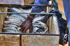 Fisherman (Achala Photography) Tags: achala rajapaksha