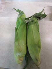 Husked (creed_400) Tags: summer food west corn belmont michigan august cob husk