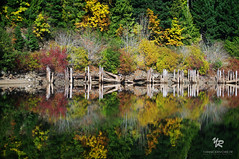 Horne lake in Vancouver Island, CANADA (Yannick-R) Tags: lake canada nature water vancouver landscape reflexion yannick horne rivoire hornelakeinvancouverisland