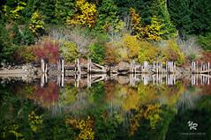 Horne lake in Vancouver Island, CANADA (Yannick-R) Tags: lake canada nature water vancouver landscape reflexion yannick horne rivoire hornelakeinvancouverisland