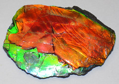 Ammolite from Placenticeras fossil ammonite (Bearpaw Formation, Upper Cretaceous, 70-75 Ma; mine in St. Mary River Valley, southern Alberta, southwestern Canada) 1 (James St. John) Tags: canada fossil formation alberta ammonite bearpaw cretaceous ammolite placenticeras