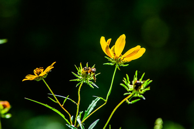 Minton Nature Preserve - September 20, 2014