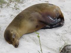 Galapagos - San Cristobal-141