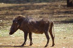A trip to Swaziland