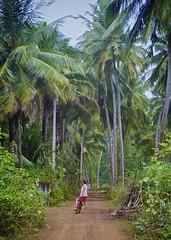 Near Ranna, Sri Lanka (I M Roberts) Tags: cycling palmtrees srilanka ranna tropicalscenery
