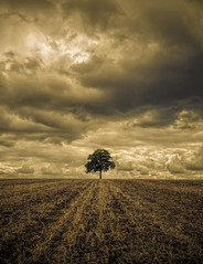 Heavy sky (grbush) Tags: sky storm tree clouds bedfordshire minimalism minimalist lonetree heavysky grantbush olympusepm2
