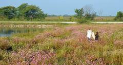 Among The Wildflowers (Jayhawk Explorer) Tags: lake nature lawrence ks ku wetlands kansas wildflowers universityofkansas douglascounty bakerwetlands monarchwatch ipiccy taggingevent sltischangingthewetlands