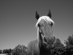 Portrait (desmoniac) Tags: horse cheval trait